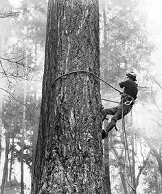 The Different Types of Santa Cruz Tree Removal Permits