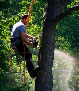 tree pruning season